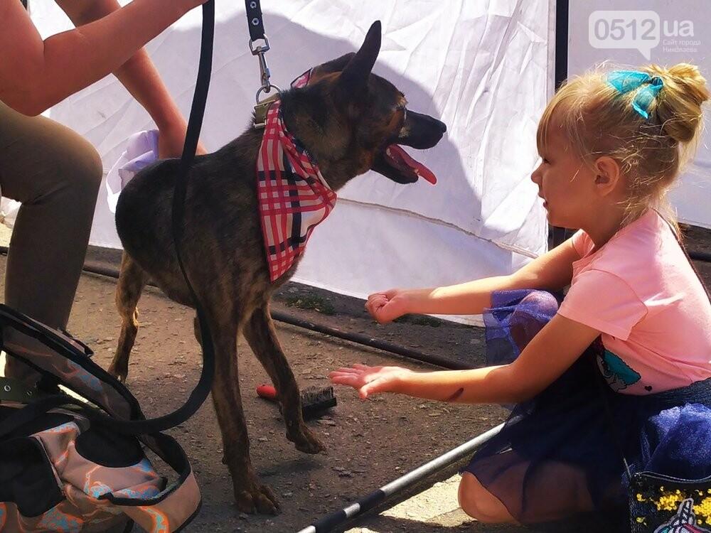 В Николаеве прошла выставка беспородных собак: многие хвостатые обрели новый дом, - ФОТО, фото-14