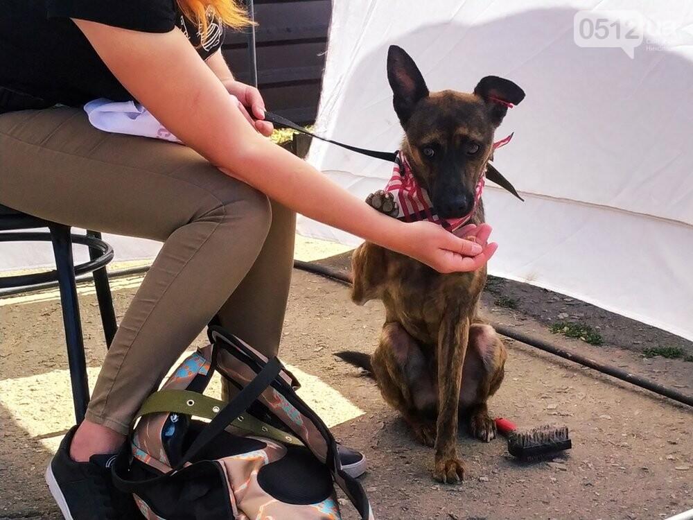 В Николаеве прошла выставка беспородных собак: многие хвостатые обрели новый дом, - ФОТО, фото-9