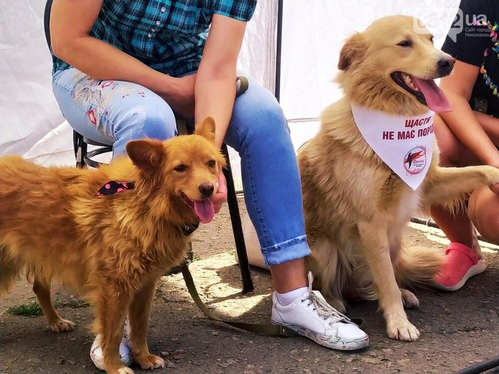 В Николаеве прошла выставка беспородных собак: многие хвостатые обрели новый дом, - ФОТО, фото-10