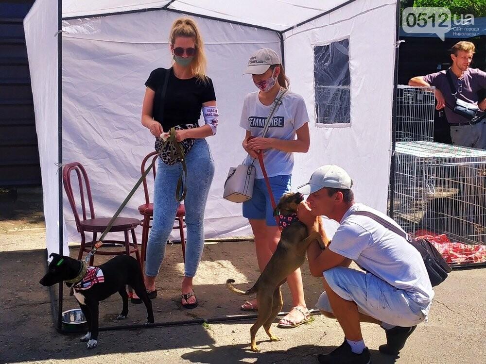 В Николаеве прошла выставка беспородных собак: многие хвостатые обрели новый дом, - ФОТО, фото-6