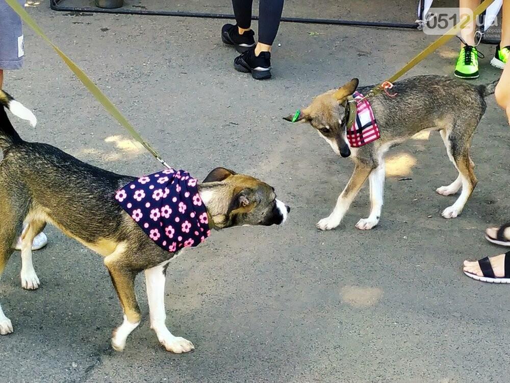 В Николаеве прошла выставка беспородных собак: многие хвостатые обрели новый дом, - ФОТО, фото-8