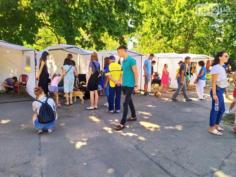 В Николаеве прошла выставка беспородных собак: многие хвостатые обрели новый дом, - ФОТО, фото-7