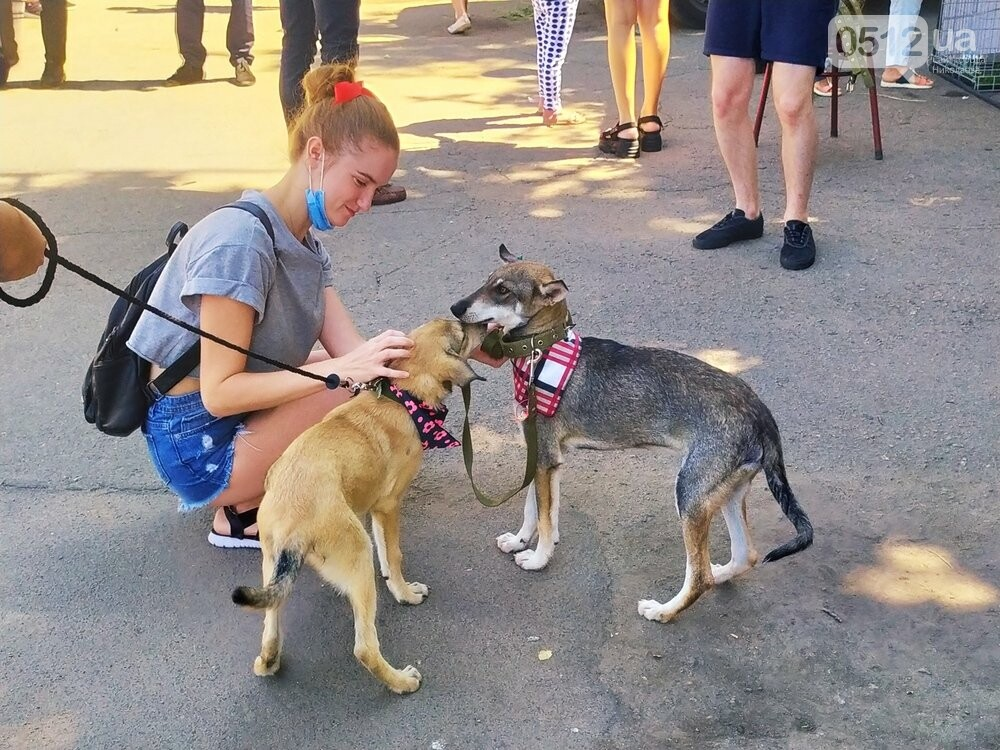 В Николаеве прошла выставка беспородных собак: многие хвостатые обрели новый дом, - ФОТО, фото-5