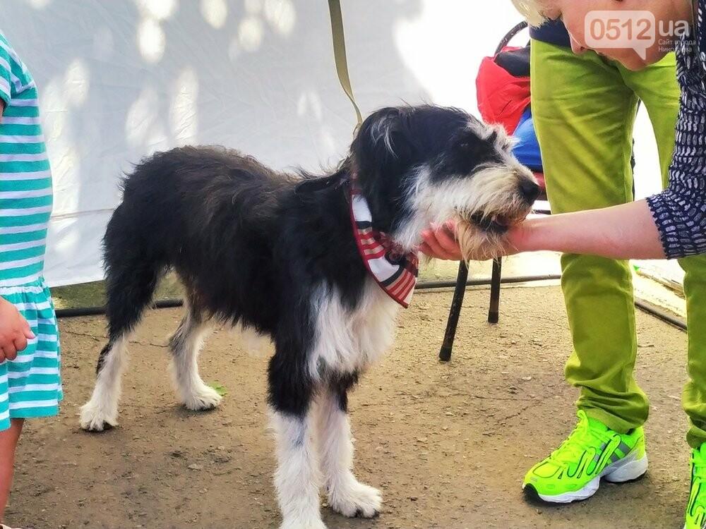 В Николаеве прошла выставка беспородных собак: многие хвостатые обрели новый дом, - ФОТО, фото-2