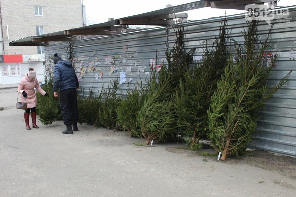 Живая елка в Николаеве
