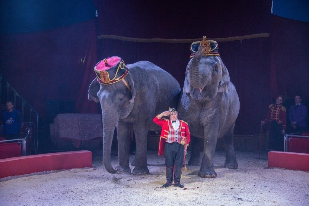 Итальянские артисты цирка привезут в Николаев праздник, фото-18