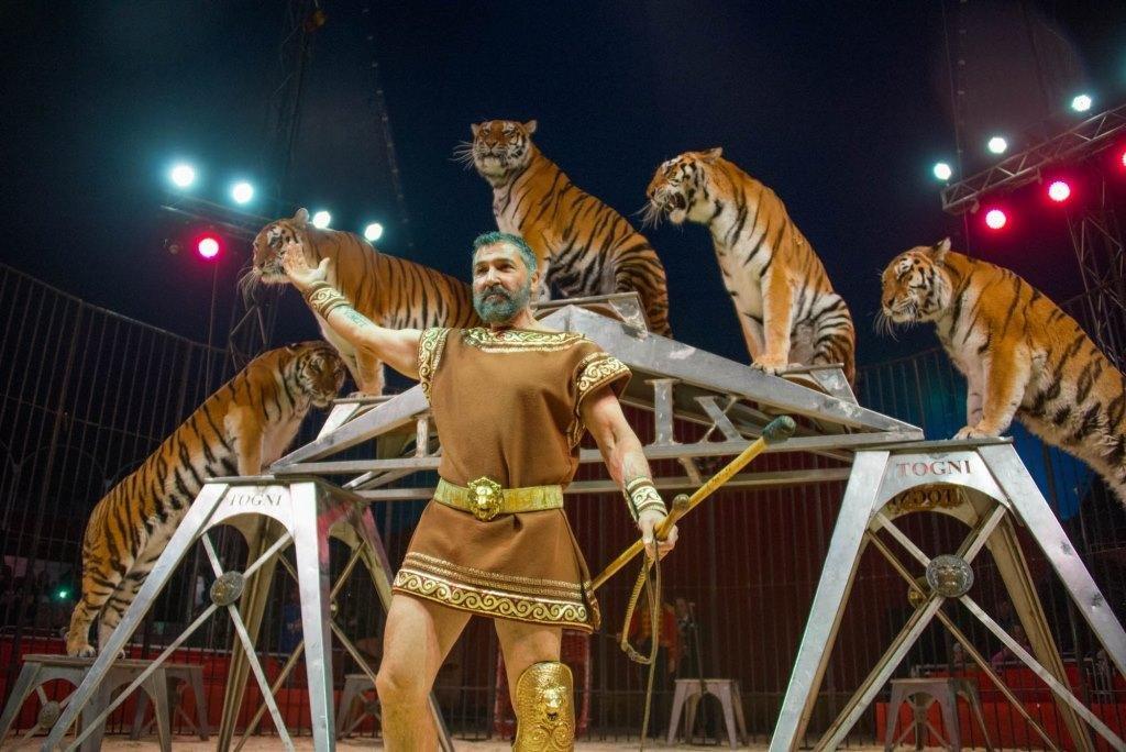 Итальянские артисты цирка привезут в Николаев праздник, фото-1