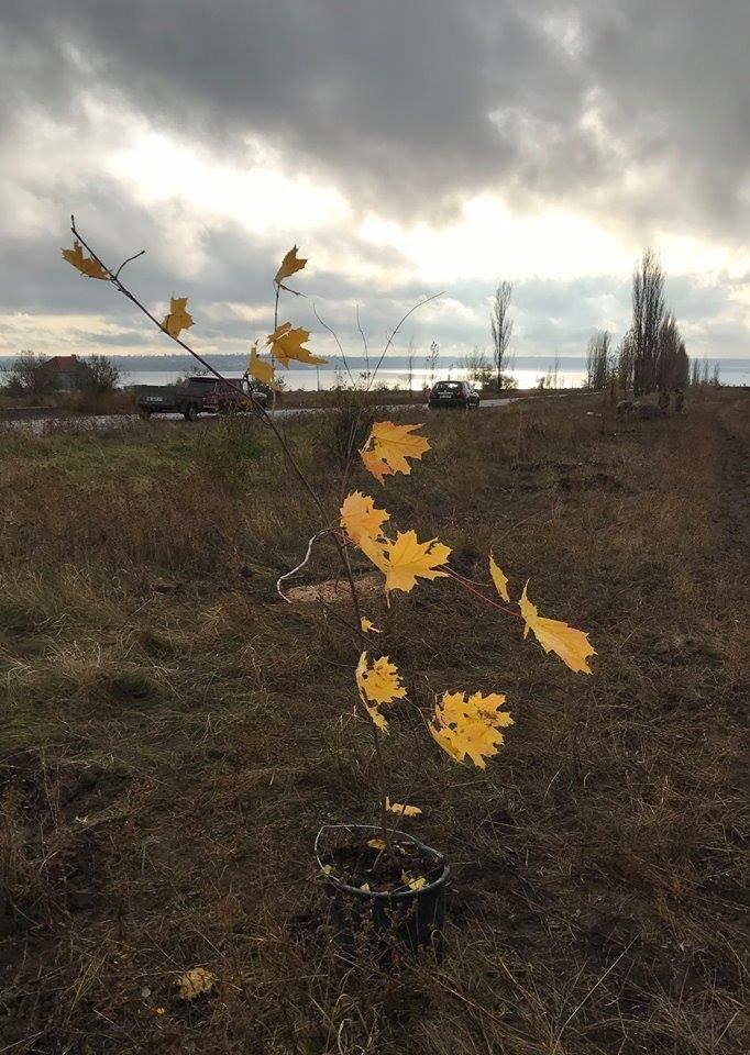 """""""Армия за экологию"""": бойцы 406-й бригады высадили около сорока деревьев в Николаеве, - ФОТО, фото-4"""
