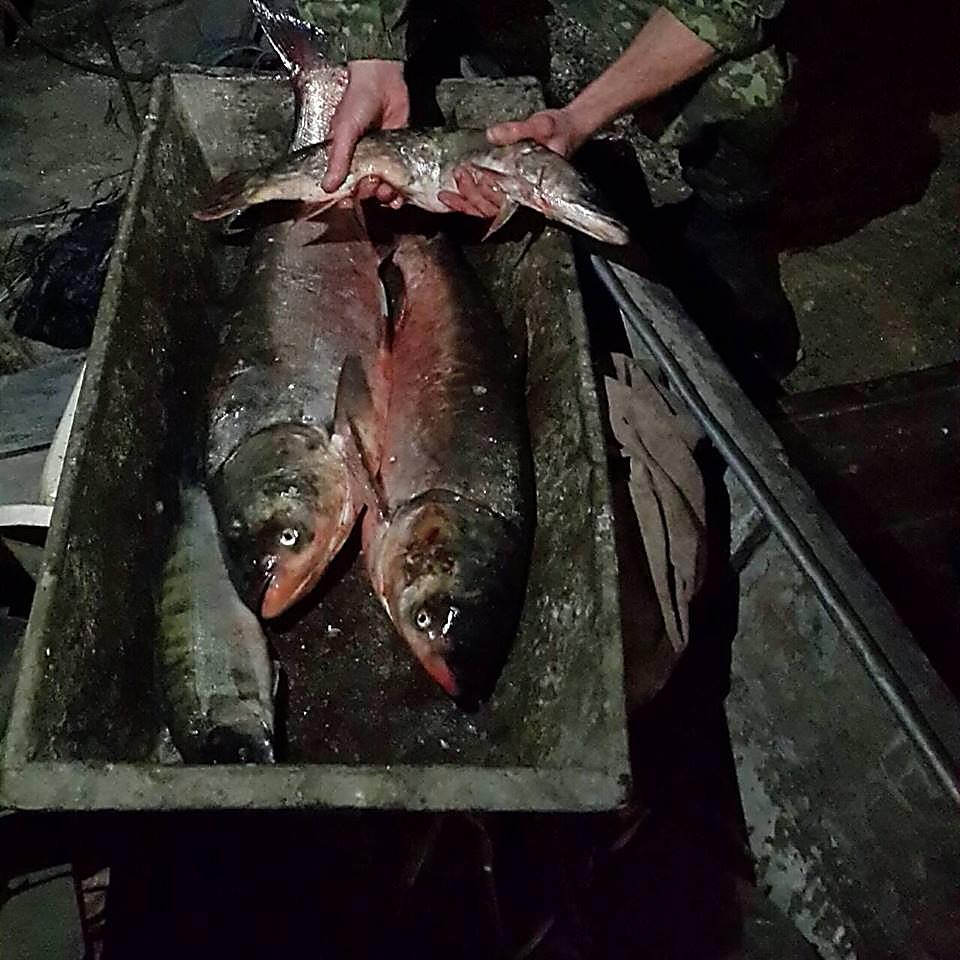 У браконьеров на Николаевщине полиция изъяла крупный улов рыбы, патроны и взрывчатку, - ФОТО, фото-1