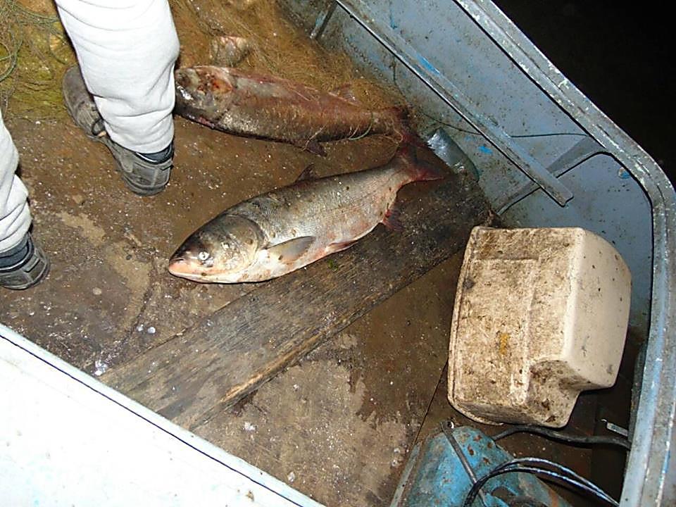 У браконьеров на Николаевщине полиция изъяла крупный улов рыбы, патроны и взрывчатку, - ФОТО, фото-10