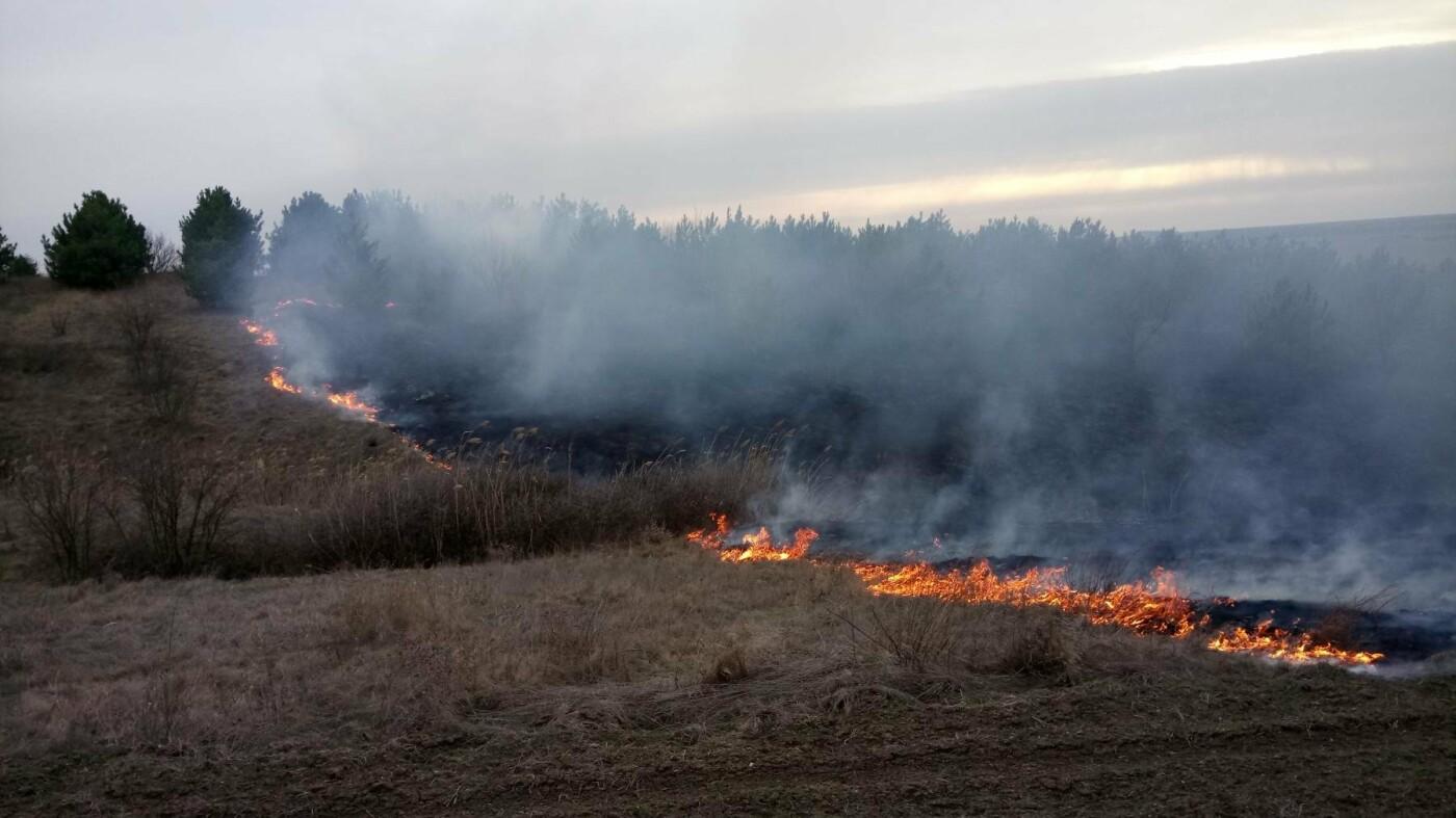 На Николаевщине 6 раз за сутки тушили пожар травы и камыша, - ФОТО, фото-1