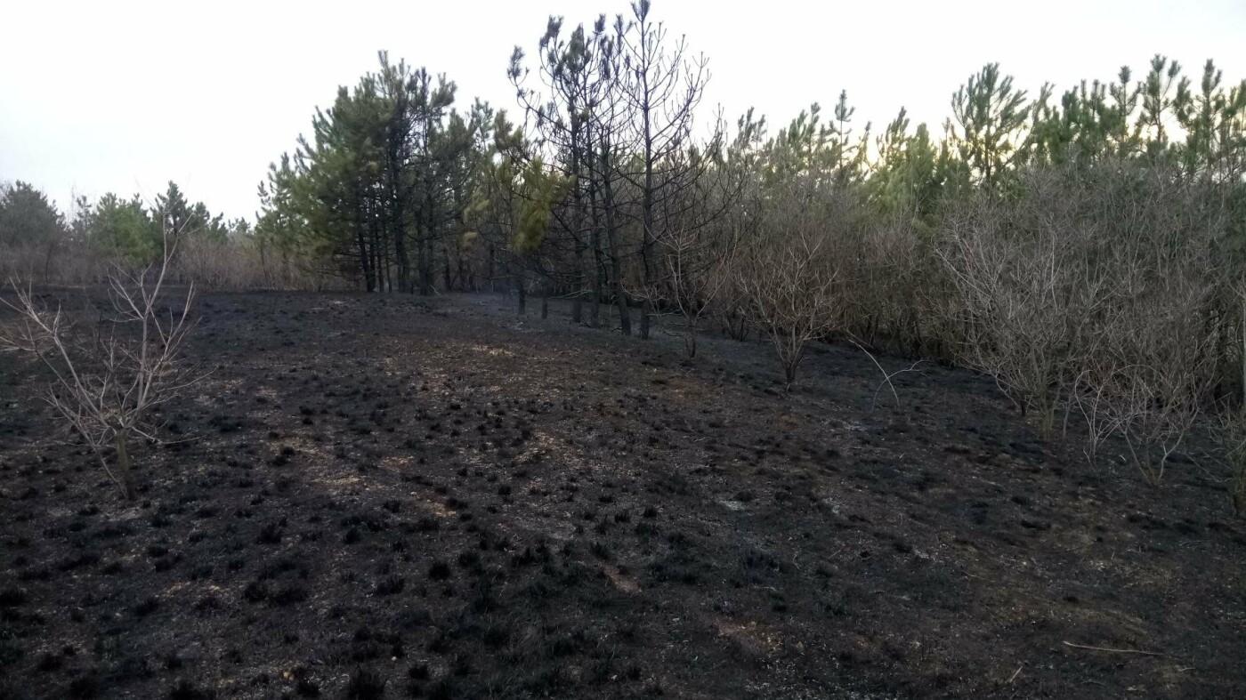 На Николаевщине 6 раз за сутки тушили пожар травы и камыша, - ФОТО, фото-2