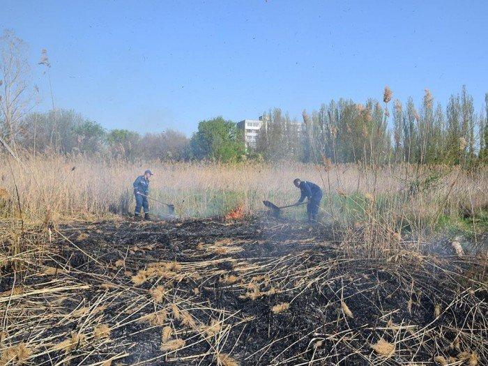 В Лесках неизвестные подожгли камыш, - ФОТО, фото-1