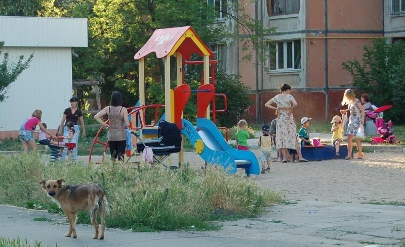 Каковы реалии жизни бездомных животных в Николаеве и Европе , фото-5