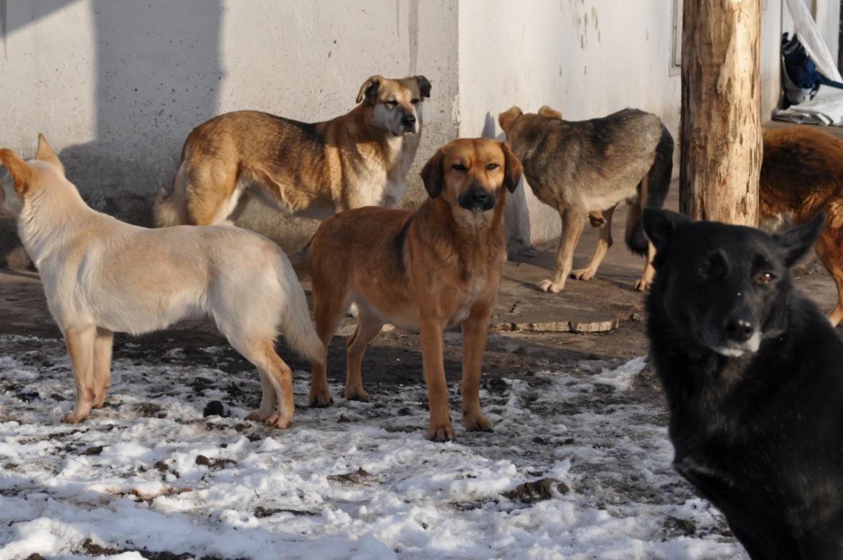 Каковы реалии жизни бездомных животных в Николаеве и Европе , фото-3
