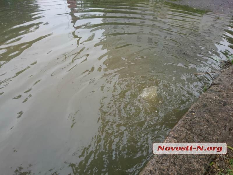 Центр Николаева снова заливает фекальными водами, - ФОТО, ВИДЕО, фото-3