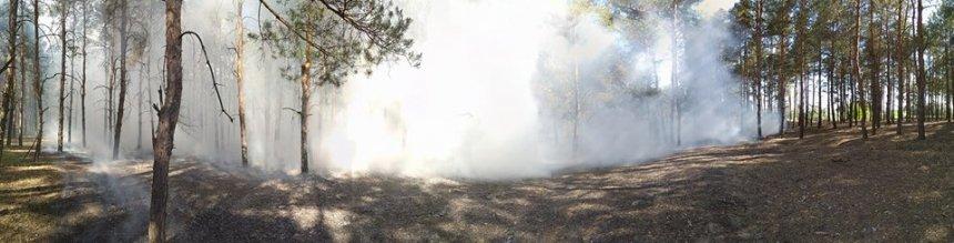 В Николаеве из-за неосторожности при курении загорелся Матвеевский лес, - ФОТО, ВИДЕО, фото-2