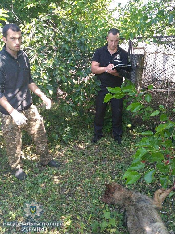 В Новой Одессе на местного жителя напал бешеный волк, - ФОТО, фото-2