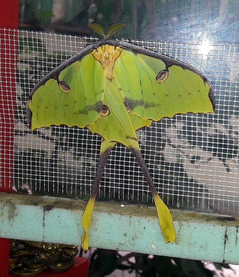 В Николаевском зоопарке появилась на свет самая необычная бабочка в мире, фото-1