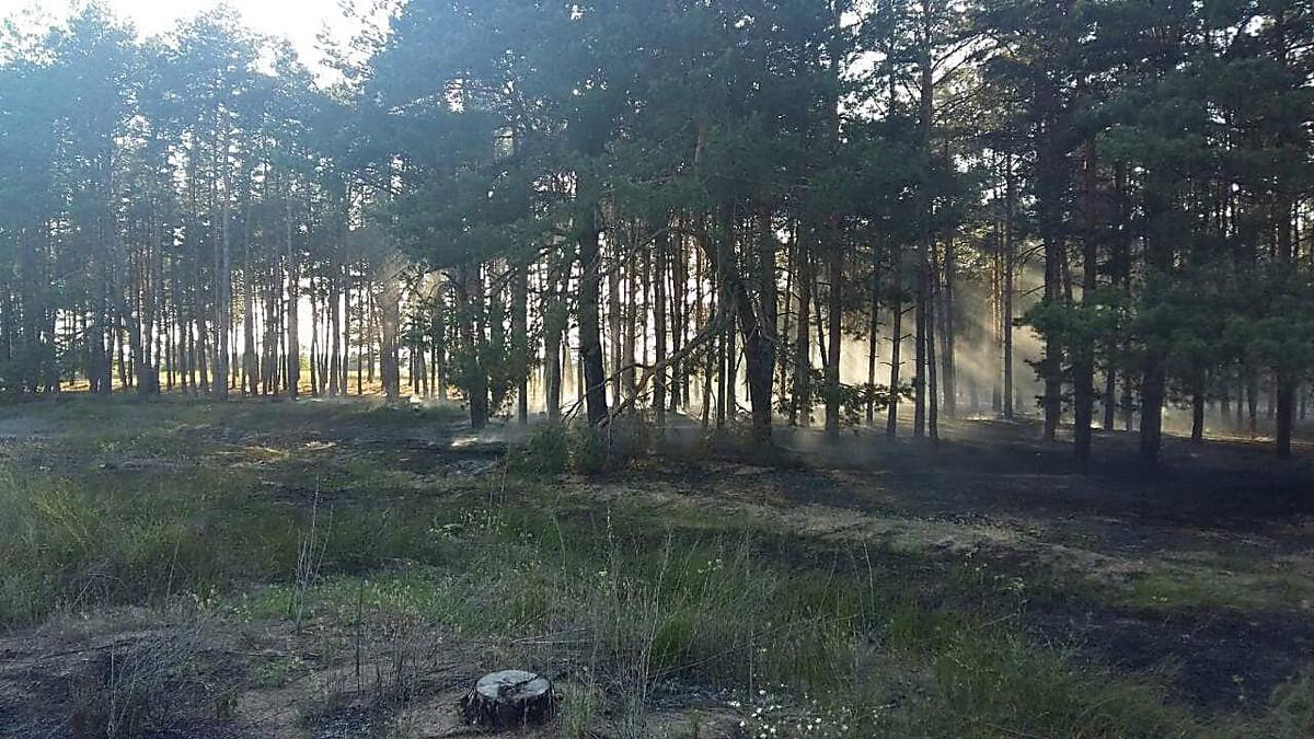 В Николаеве неизвестные подожгли лесополосу, - ФОТО, фото-2