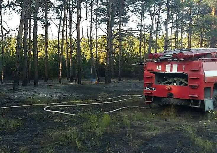 В Николаеве неизвестные подожгли лесополосу, - ФОТО, фото-1
