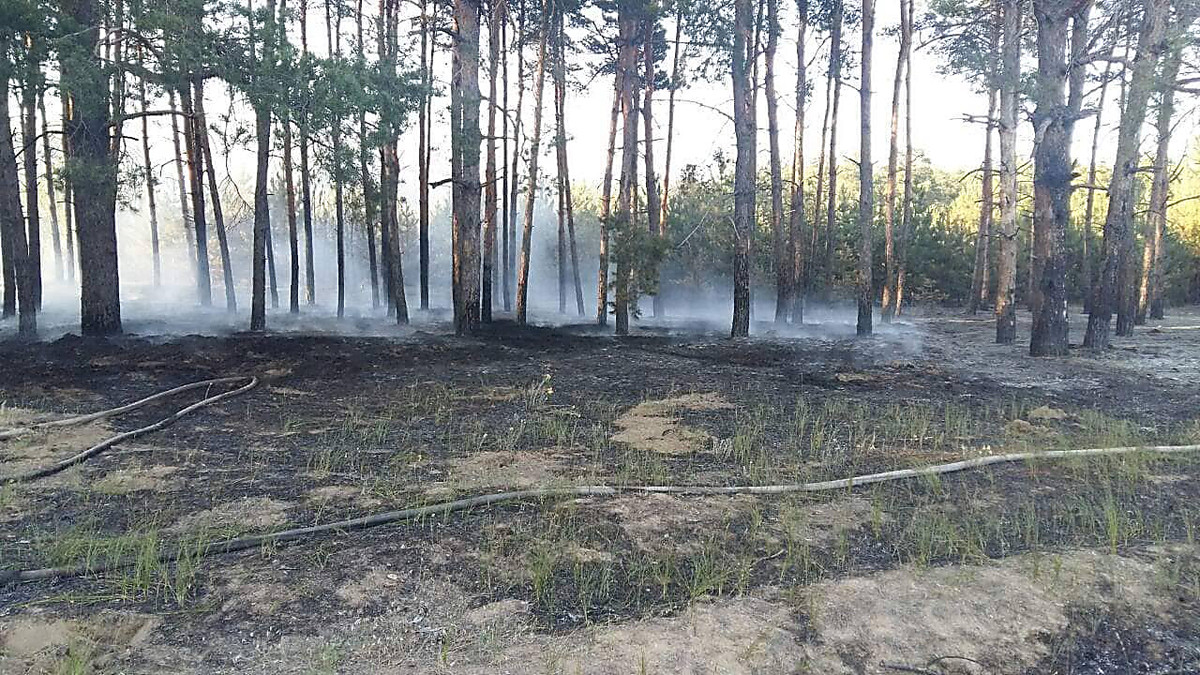 В Николаеве неизвестные подожгли лесополосу, - ФОТО, фото-4