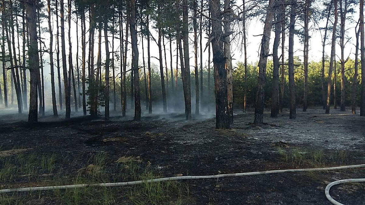 В Николаеве неизвестные подожгли лесополосу, - ФОТО, фото-3