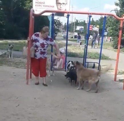 В Николаеве стая бездомных собак выгнала ребенка с детской площадки, - ФОТО, ВИДЕО, фото-2