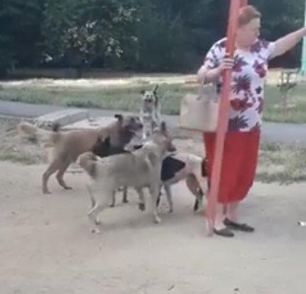 В Николаеве стая бездомных собак выгнала ребенка с детской площадки, - ФОТО, ВИДЕО, фото-1