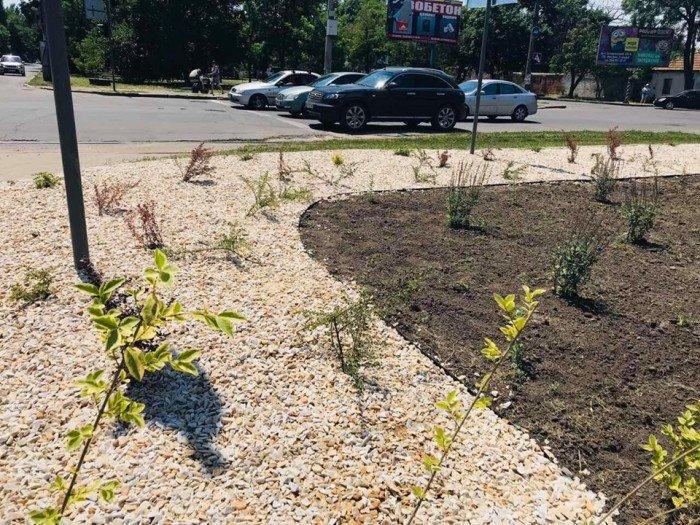 В Николаеве появилась новая озелененная зона, - ФОТО, ВИДЕО, фото-2