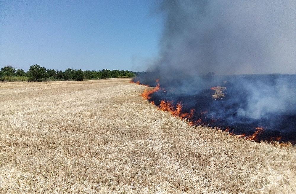 На территории Николаевщины спасатели продолжают тушить пожары сухостоя, - ФОТО, фото-6
