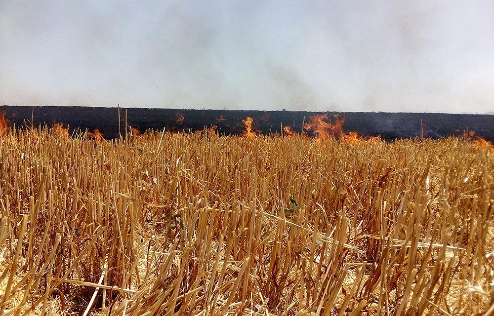 На территории Николаевщины спасатели продолжают тушить пожары сухостоя, - ФОТО, фото-5
