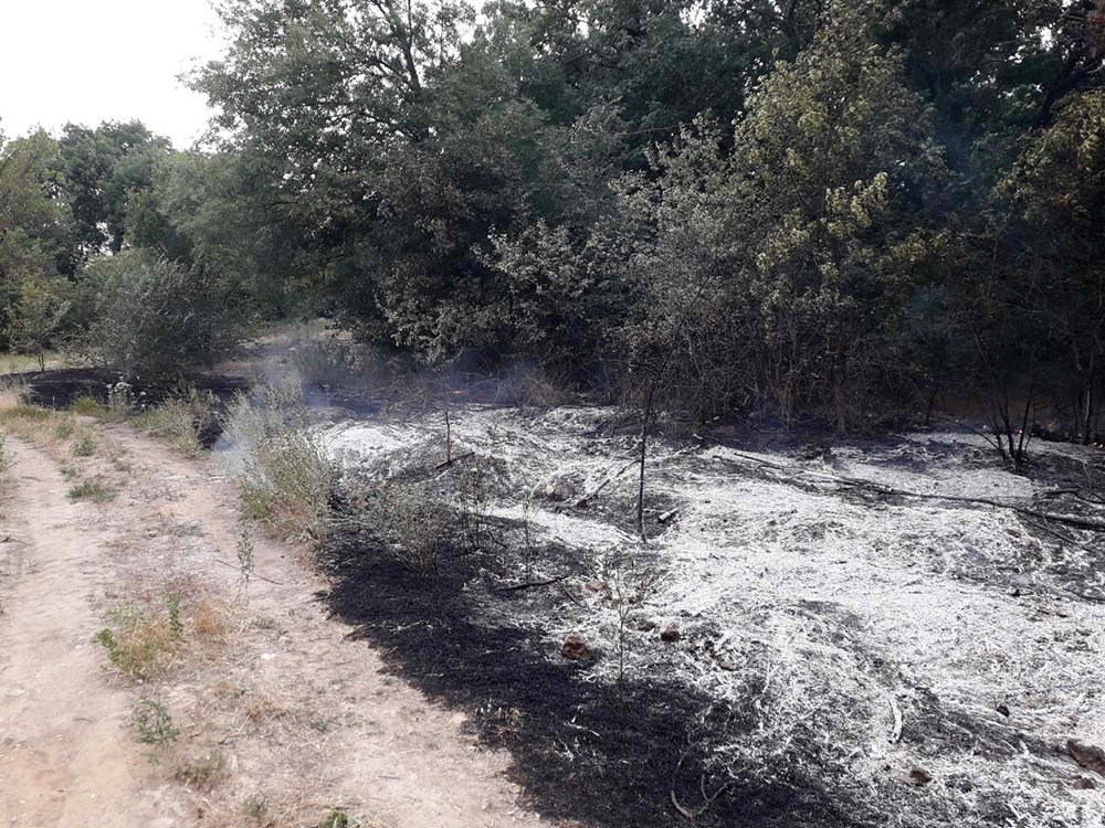 Спасатели Николаевщины ликвидировали пожары на открытых территориях, - ФОТО, фото-2