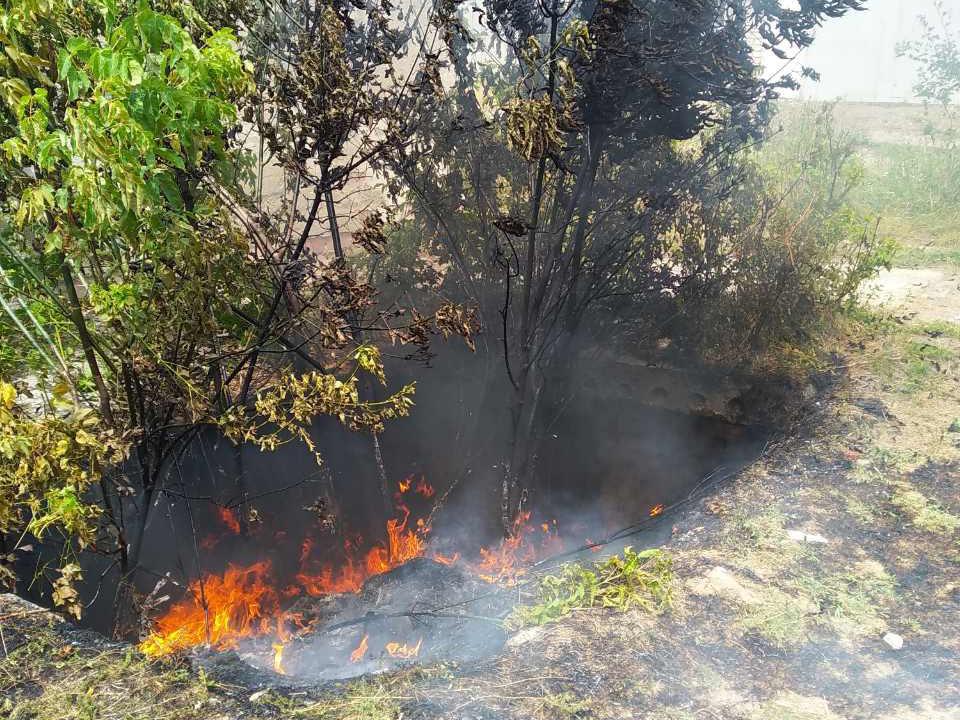 На Николаевщине за прошлые сутки зарегистрировано 10 пожаров сухостоя, - ФОТО, фото-6