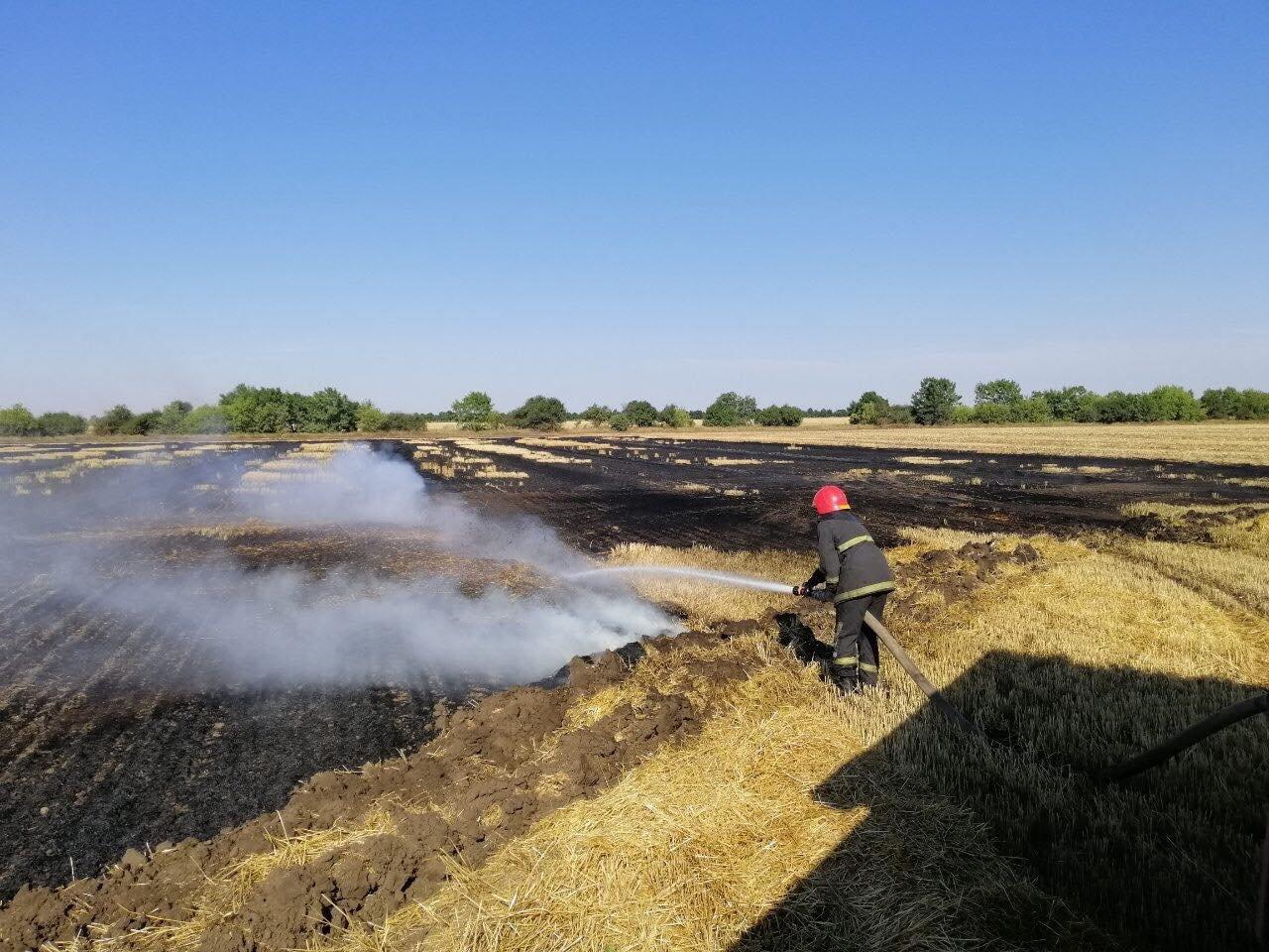 На Николаевщине выгорело более 15 га сухостоя и питательных остатков, - ФОТО, фото-1