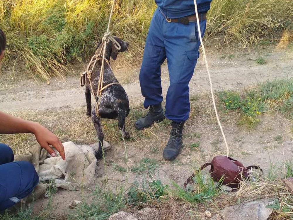 На Николаевщине спасли собаку провалившуюся в колодец, - ФОТО, фото-4