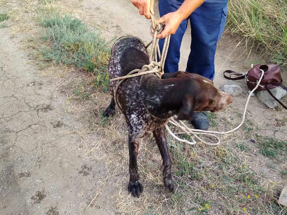 На Николаевщине спасли собаку провалившуюся в колодец, - ФОТО, фото-5