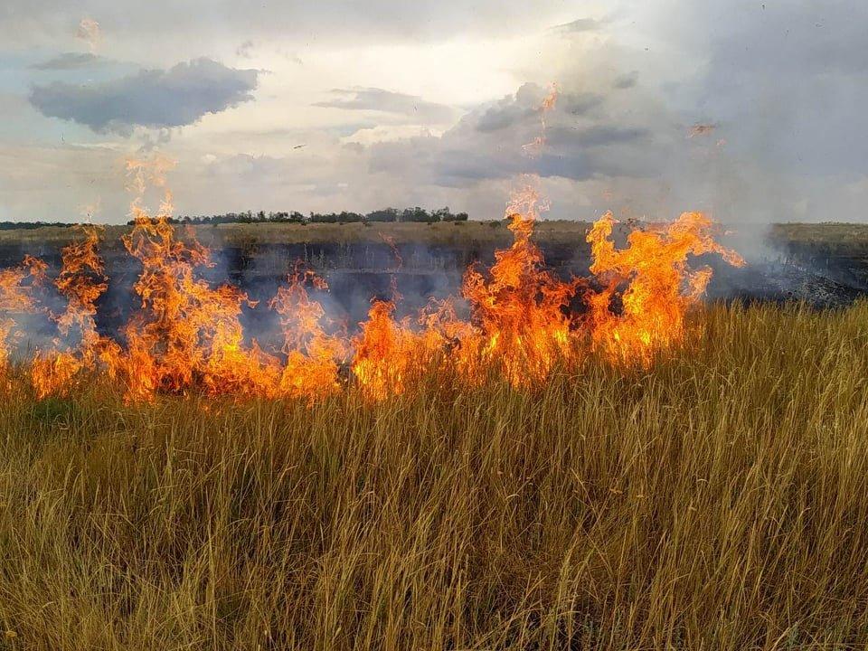 В течение суток спасатели потушили 10 пожаров на открытых территориях, - ФОТО, фото-1