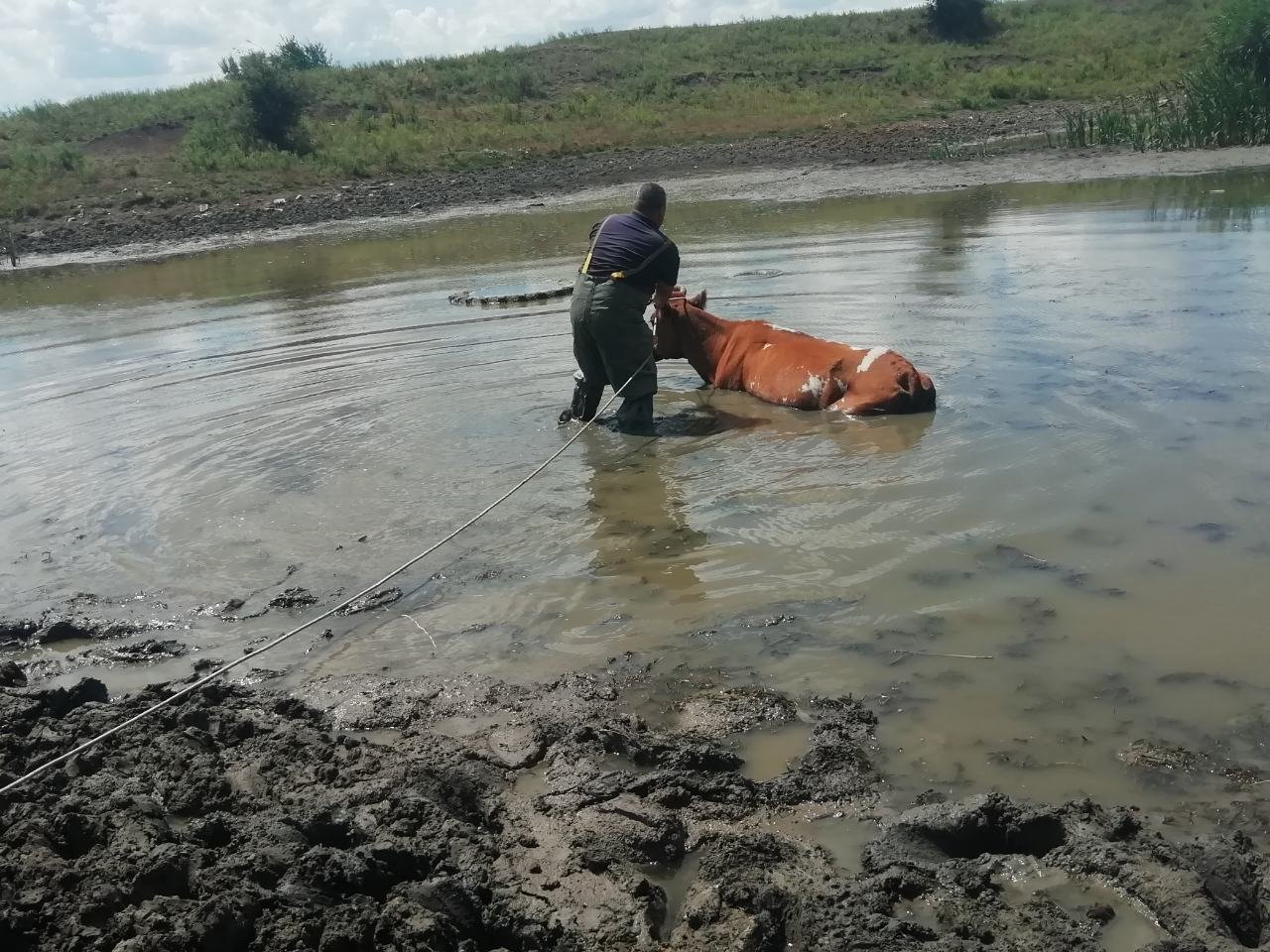 Спасатели Николаевщины вытащили корову из болота, - ФОТО, фото-1