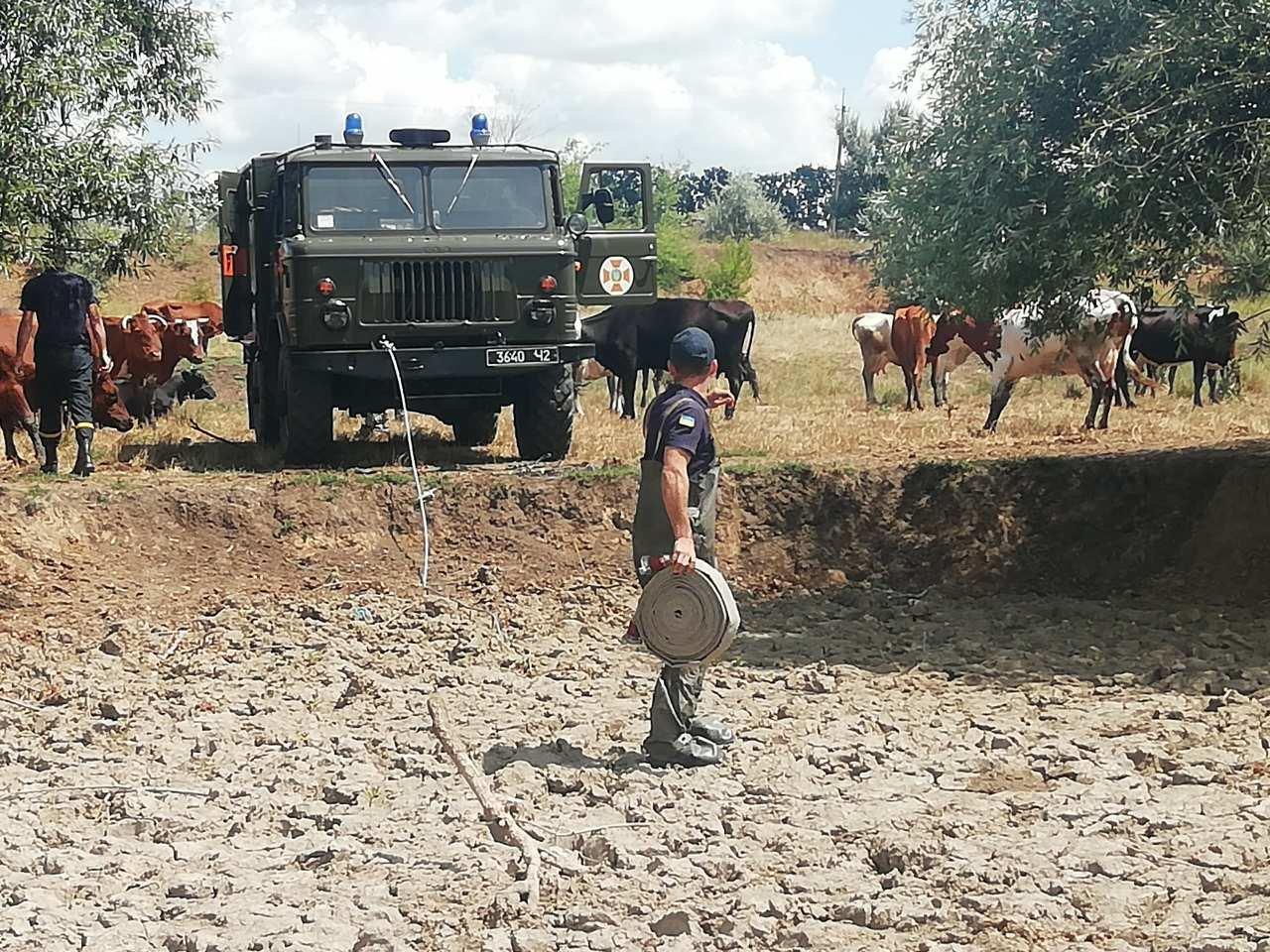 Спасатели Николаевщины вытащили корову из болота, - ФОТО, фото-2