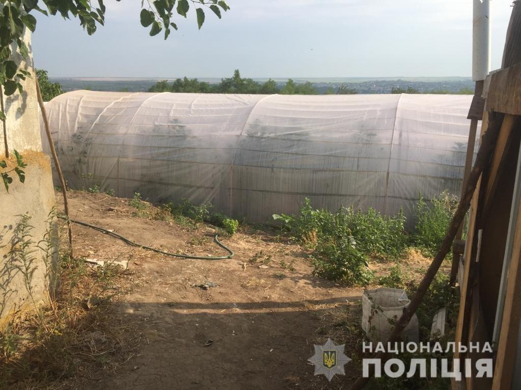 На Николаевщине обнаружили плантацию теплиц по выращиванию каннабиса, - ФОТО, ВИДЕО, фото-2