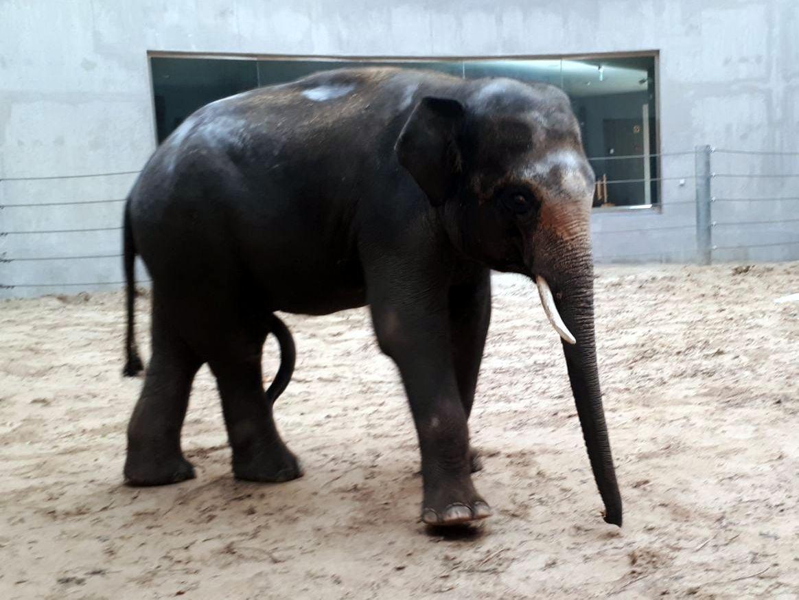 В Николаевский зоопарк едут два азиатских слона, - ФОТО , фото-2