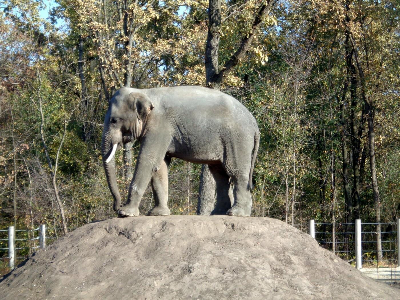 В Николаевский зоопарк едут два азиатских слона, - ФОТО , фото-1