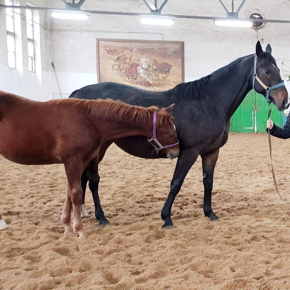 В Николаеве нашли жеребца, которого неизвестный увел с конюшни, фото-2