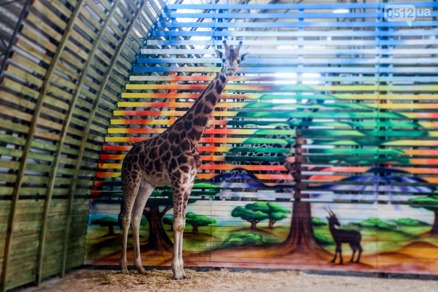 Жирафы ссорятся, а слоны играют: в Николаевском зоопарке рассказали о новичках, - ВИДЕО