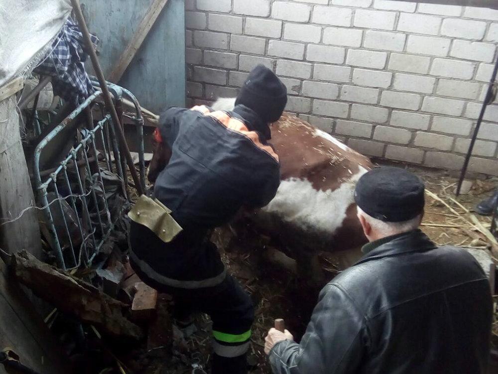 На Николаевщине спасали корову - животное не пострадало, фото-3
