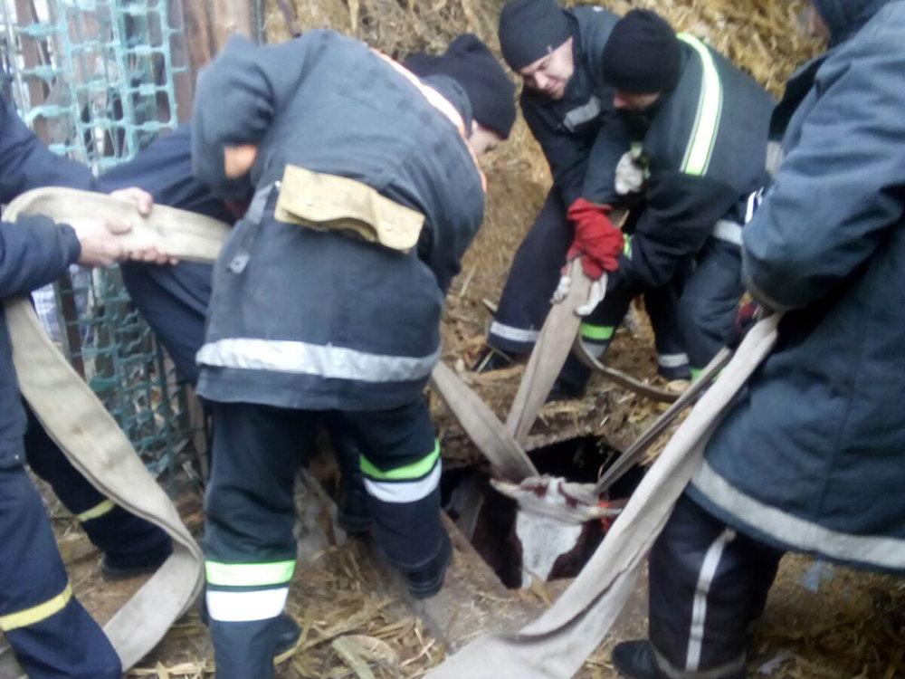 На Николаевщине спасали корову - животное не пострадало, фото-4