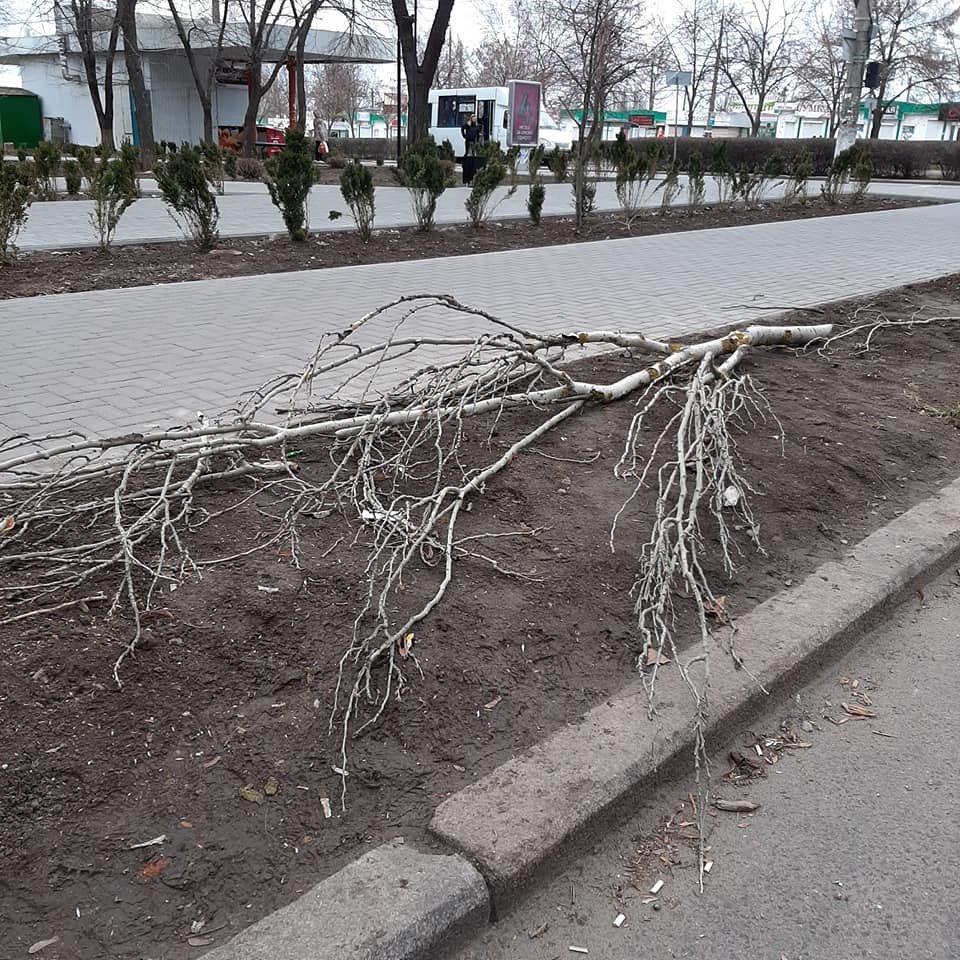 """В Николаеве вандалы """"похозяйничали"""" в новом сквере, - ФОТО , фото-4"""