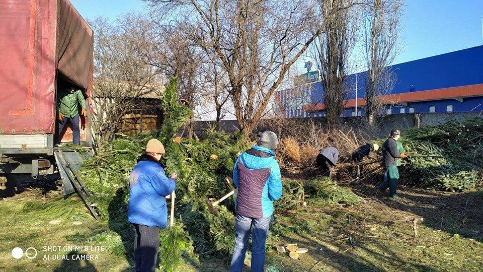 В Николаевский зоопарк люди продолжают привозить сосны и ели, - ФОТО , фото-5