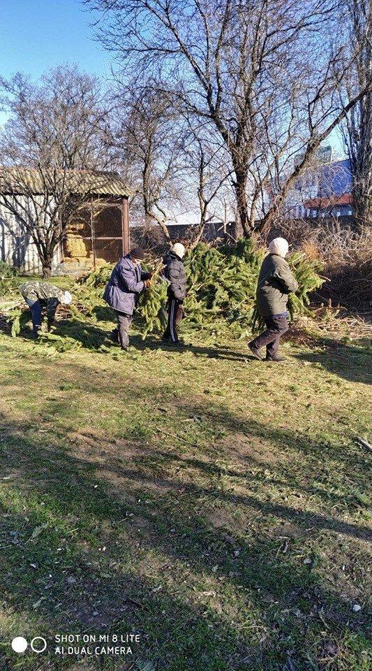 В Николаевский зоопарк люди продолжают привозить сосны и ели, - ФОТО , фото-8